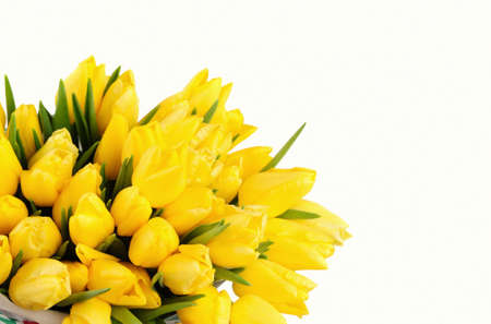 brightly colored: Yellow Tulips isolated over white background Stock Photo
