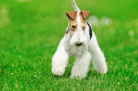 frisky: dog