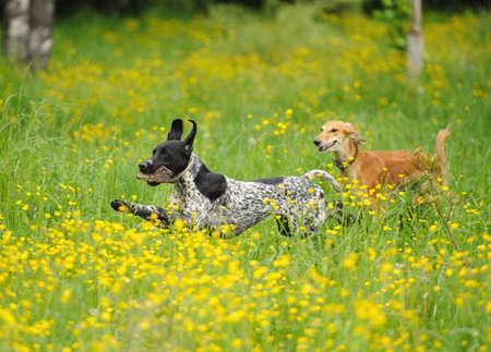 perros jugando: perros divertidos jugando en la hierba verde