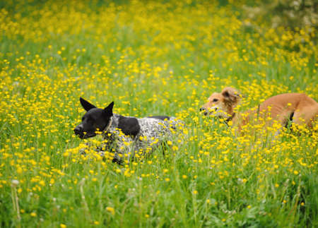 perros jugando: funny dogs playing on the green grass