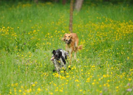 perros graciosos: perros divertidos jugando en la hierba verde