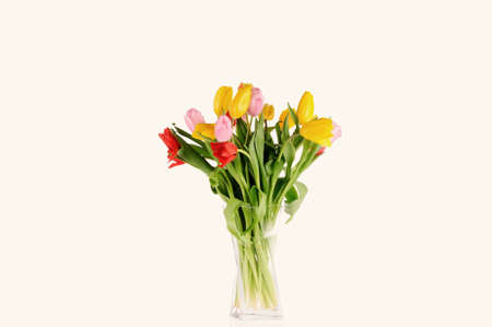 Tulips in the studio isolated over white background Stock Photo