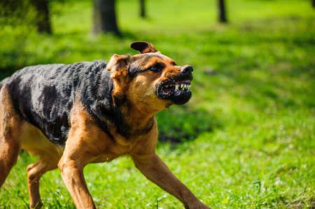cane arrabbiato con denti scoperti