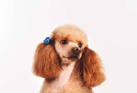 studio portrait of the dog on a white background