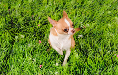 studio portrait of the dog on a green grass