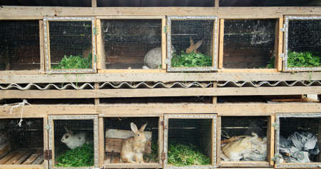 rabbits in the wooden cage 版權商用圖片