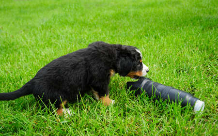 small puppy on a green grass near photo lens