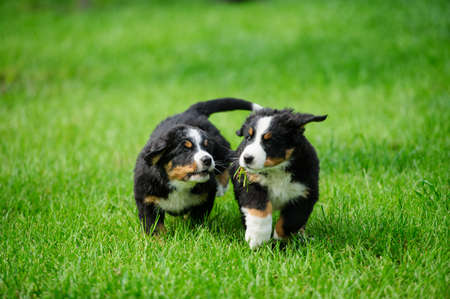 small happy puppies playing in a green grass