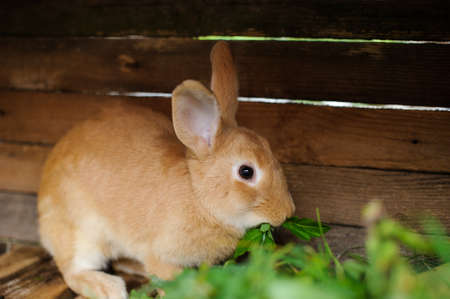 rabbit in the wooden cage Imagens