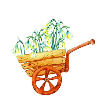 Bouquet of spring flowers of primroses in a cart. Hand watercolor illustration isolated on white background. For the design of postcards, banners, greetings, weddings, invitations, covers.