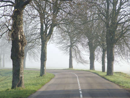 Road with trees and mist photo