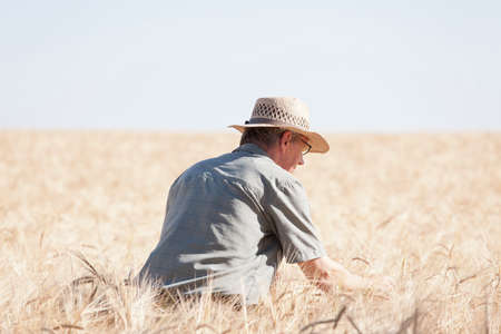Mature farmer on his knees examining dried up field of crop on hot day as a result of the global warming - focus on the man