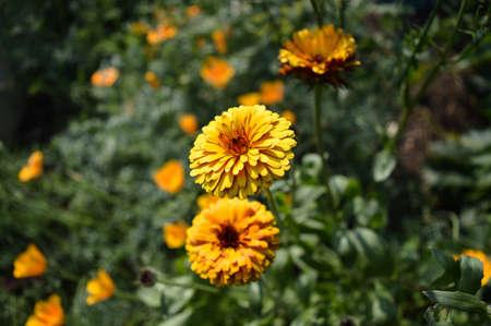 plant nature: nature macro flower sunset summer plant yellow