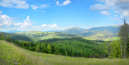 Beautiful mountainside panorama quiet plateau in Ukrainian Carpathians. White cumulus clouds in bright blue heaven above towns in the lowland and high hills overgrown with green firry groves Фото со стока