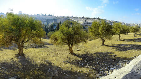 Yerushalayim, Middle East, May 2016. Old sacred capital of Judea. Archaic downtown panoramic view with space for text on blue sky backdrop. Famous jew holy land place of judaic King David, Solomon Archivio Fotografico
