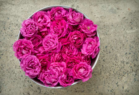 Bright romantic pure fresh crimson rosa flowerheads collected in steel bucket for drying for body spa salon skin care. Close up detail top view with copy space for text on grunge grey stone surface 스톡 콘텐츠