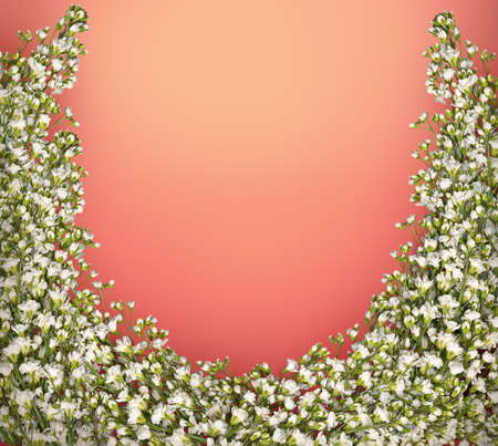 Arabis caucasica (Brassicaceae) or rock cress. Romantic beautiful garland with small terry pale milky wildflowers isolated on bright red backdrop with clipping masks. View close-up with space for text