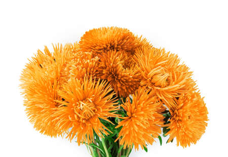 Curvy needle vibrant amber asters isolated on white background with clipping path. Close-up view with space for text