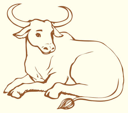 Vector monochrome linear illustration of lying cow with big horns. Zebu, sometimes known as humped cattle or Brahman, is a type of domestic cattle originating in South Asia, characterized by a fatty hump on their shoulders, drooping ears and a large dewlap