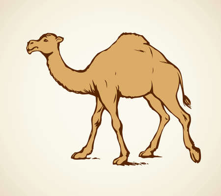 Camel is herbivorous enduring mammal with hump isolated on white background. Freehand outline ink hand drawn picture sketch in art doodle style pen on paper. Side view with space for text