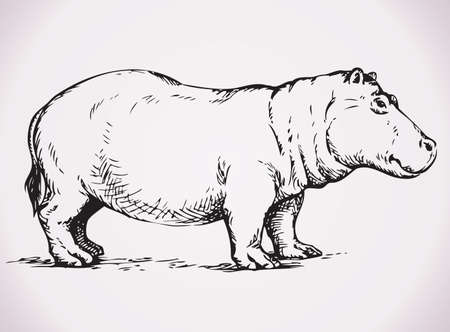 Big fat hippopotamus standing on land. Vector monochrome freehand ink drawn background sketchy in art scribble antiquity style pen on paper with space for text Иллюстрация