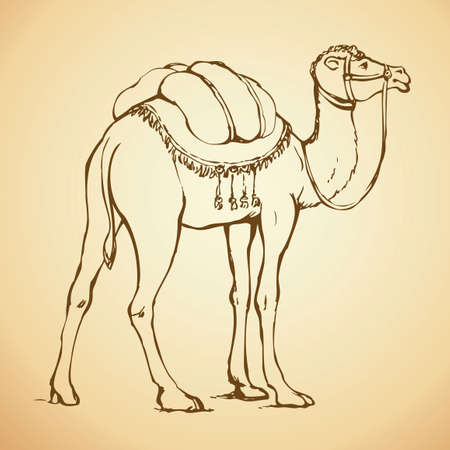 Camel is herbivorous enduring mammal with hump on its back with reserve of fat. Vector monochrome freehand ink drawn background sketchy in art scribble antiquity style pen on paper with space for text