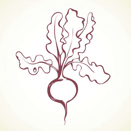 Tasty ripe juicy raw fresh sappy red raphanus isolated on white backdrop. Freehand outline ink hand drawn symbol sign sketchy in retro art scribble style pen on paper. Closeup view with space for text