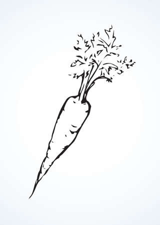 Ripe fresh sappy Daucus carota haulm taproot isolated on white backdrop. Freehand line black ink hand drawn symbol sign sketchy in retro art doodle style pen on paper. Closeup view with space for text Векторная Иллюстрация