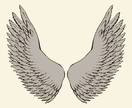 Two outspread large soft wings with long fluffy glide white plume. Vector monochrome freehand black ink drawn background sketchy in art scribble ancient style pen on paper with space for text on sky Vettoriali