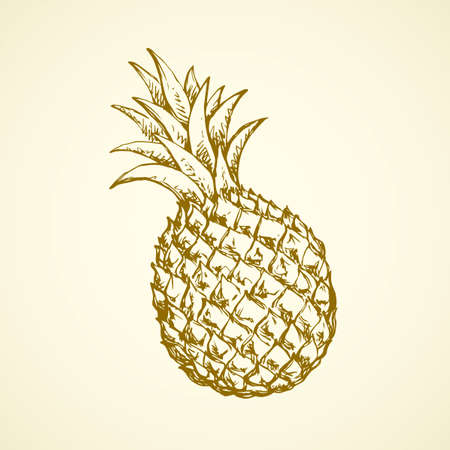 Yummy sappy pinapple comosus fruitful isolated on white backdrop. Freehand outline black ink hand drawn picture logo sketchy in retro art scribble style pen on paper. Closeup view with space for text