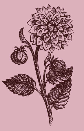 Vector drawing monohramny branches dahlias with buds and leaves
