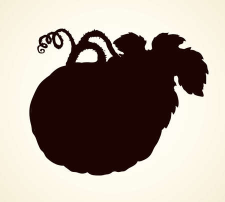 Raw large pumpkin isolated on white backdrop. Dark ink hand drawn picture sketchy in art retro print style. View closeup with space for text