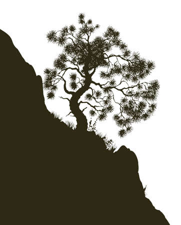 Old alone Pinus plant on craggy bluff chasm isolated on white backdrop. Dark black ink drawn scenic picture sketchy in art retro scribble graphic style pen on paper with space for text on sky