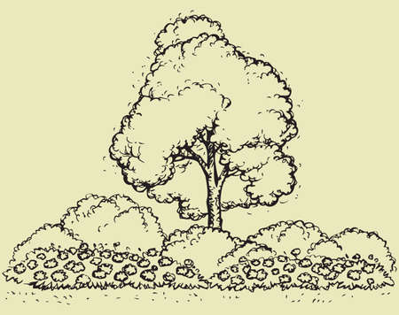 Cute green tree for lush flowering shrubs and flower bed. Vector monochrome freehand sketchy linear drawn background in doodle style pen on paper with space for text Illusztráció