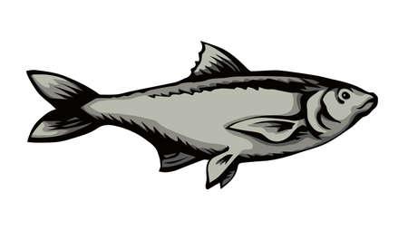 Big Cyprinus carpio pet swim on white paper text space. Outline black ink hand drawn small raw diet bass ruff pictogram emblem design menu in retro art doodle engrave print style. Close up view