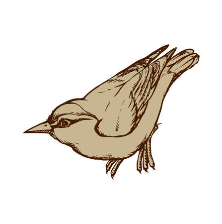 Nuthatch isolated on white background. Freehand outline ink hand drawn image sketchy in art scribble retro style pen on paper. Closeup side view with space for text