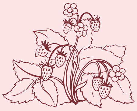 Vector monochrome line drawing. Strawberry bush with flowers and berries 向量圖像