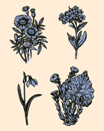 First forest springtime little herbal ants. Herbaceous, Tagetes, primroses, Amaryllidaceae isolated on white background. freehand black ink hand drawn picture in art engraving retro style. Closeup Ilustrace