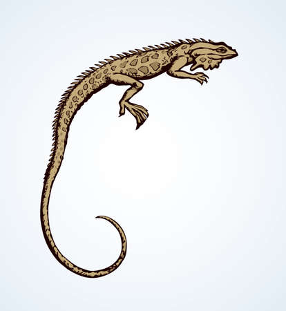 Squamate old reptiles Lacertilia pet isolated on white backdrop. Freehand outline ink hand drawn picture symbol sketchy in art retro doodle style pen on paper. Closeup view with space for text on sky