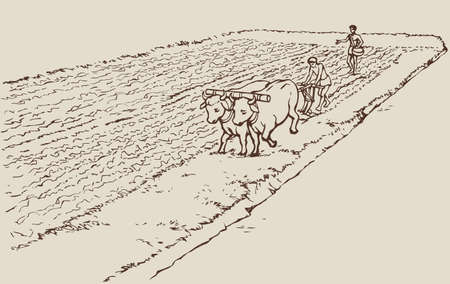 Vector monochrome line drawing in the style of the book engraving. Primitive agriculture. One farmer plows the land plot pulled on a pair of oxen. Second sows grain plowed field