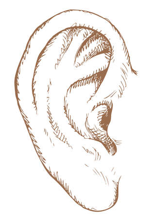 Human ear. Vector monochrome freehand ink drawn background sketchy in art scribble antique style pen on paper with space for text Vettoriali