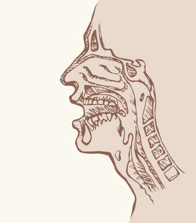 Healthy people Nasopharyngeal hyoid body part isolated on white background. Outline ink hand drawn picture sketch in doodle vintage doodle style pen on paper. Closeup side face view and space for text