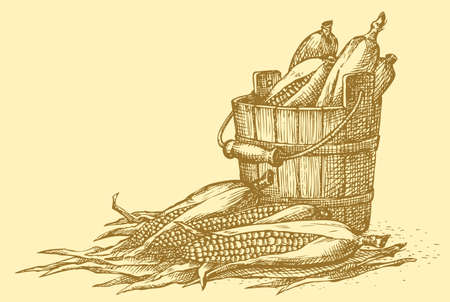 Vector still life. Sketch of the harvest of corn cobs in an old wooden bucket  イラスト・ベクター素材