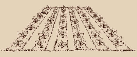 Eco early lush ripe soy bush culture corn sow root on tillage plow mulch patch land. Line ink hand drawn diet life scenic background sketch in vintage doodle cartoon engraving style and space for text