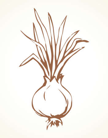 Ripen eco raw fresh common bulb leek fruitful icon isolated on white backdrop. Freehand line red ink hand drawn symbol sign sketchy in art scribble style pen on paper. Closeup with space for text 向量圖像