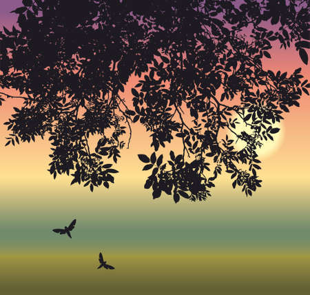 Vector drawing. Two nocturnal butterflies in the twilight under the drooping branches of a walnut