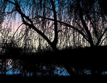 Vector landscape. Silhouette hanging branches of trees growing on the river against the evening sky 向量圖像