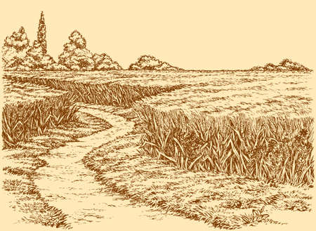 Vector summer landscape. A dirt path through fields of wheat
