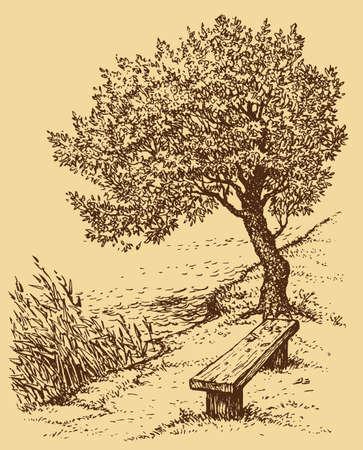 Vector landscape. Old bench near the tree on the bank of the lake Vektoros illusztráció