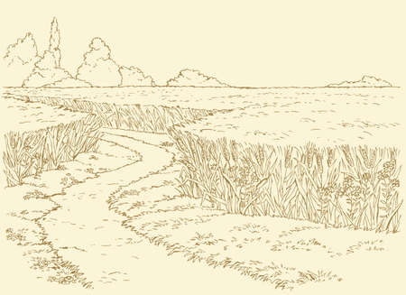 Vector summer landscape. A dirt path through fields of wheat 向量圖像